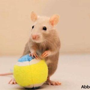 8 Rat Toys Under $10